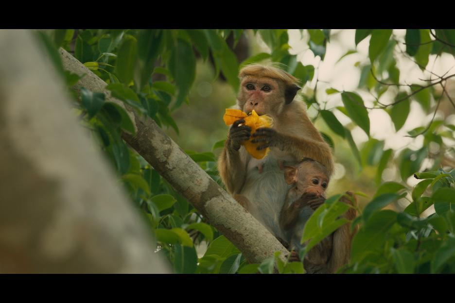 Monkey_Kingdom_2