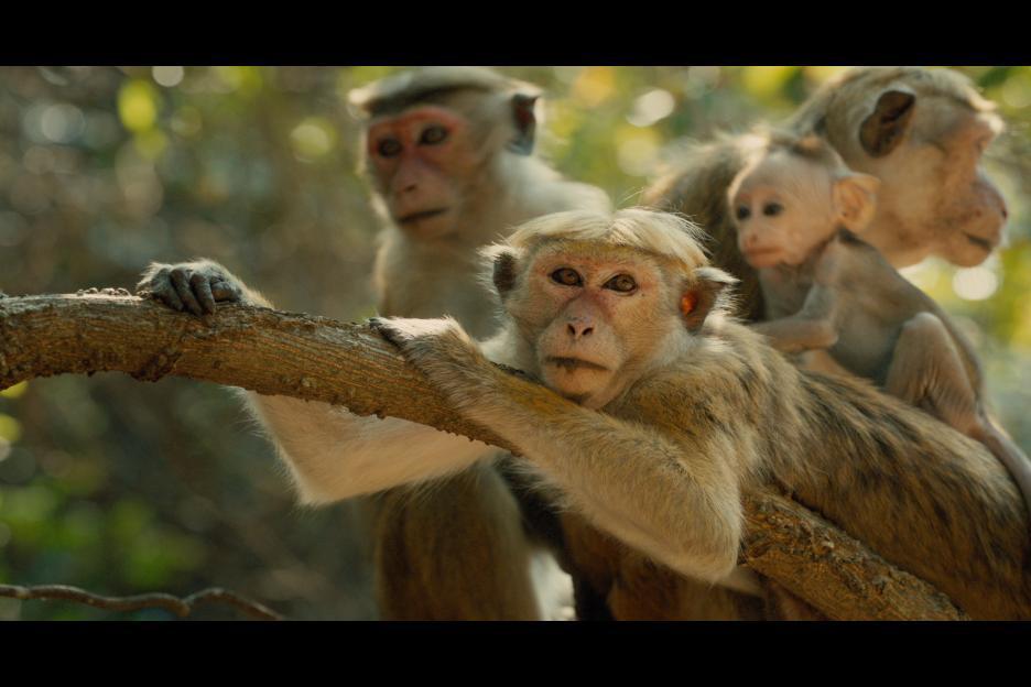 Monkey_Kingdom_3